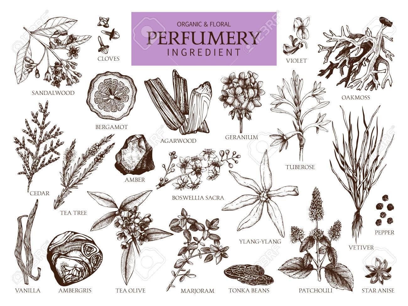 Vintage perfumery and cosmetics illustrations set - 77035366