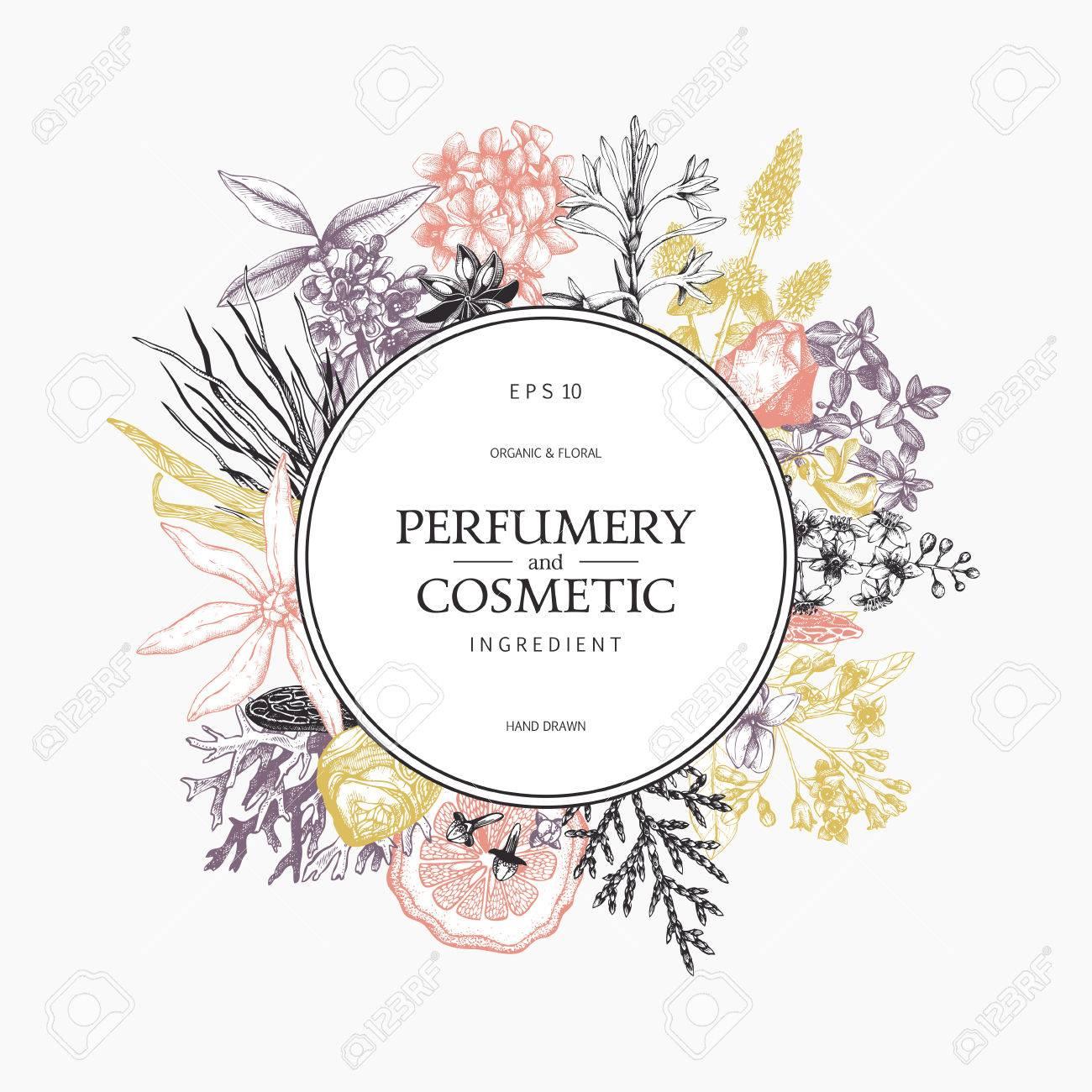 Vintage perfumery and cosmetics illustrations set - 77035373