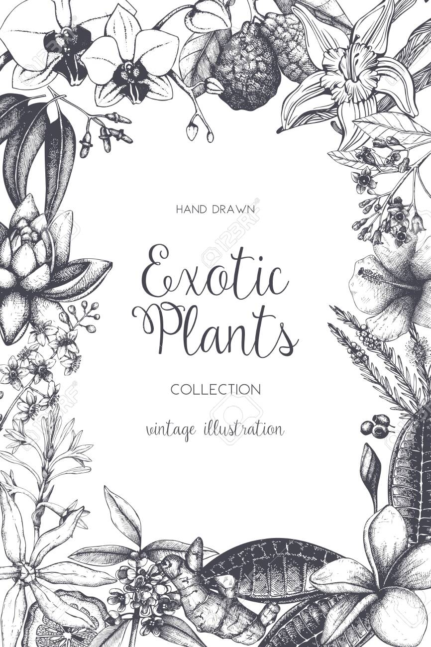 Exotic background with hand drawn plants sketch. Vector tropical flowers, leaves and fruits design. Vintage template with botanical elements on white. - 122852271