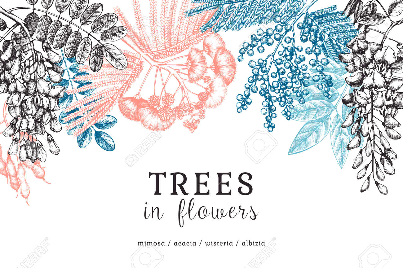 Vector banner with hand-sketched trees in flowers. Vintage illustrations on blooming wisteria, mimosa, albizia, acacia. Floral card or invitation design in color. - 170065575