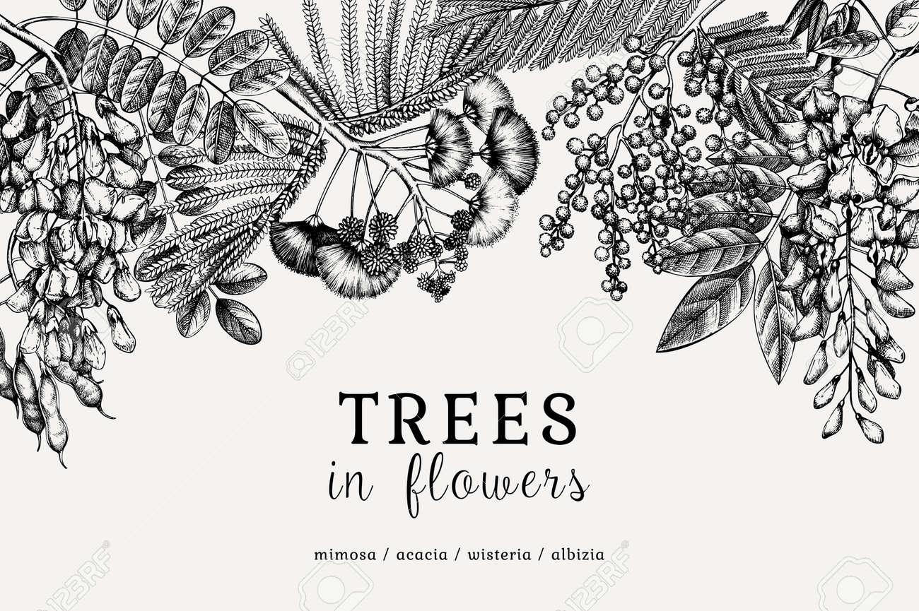 Vector banner with hand-sketched trees in flowers. Vintage illustrations on blooming wisteria, mimosa, albizia, acacia. Floral card or invitation design in retro style - 170065718