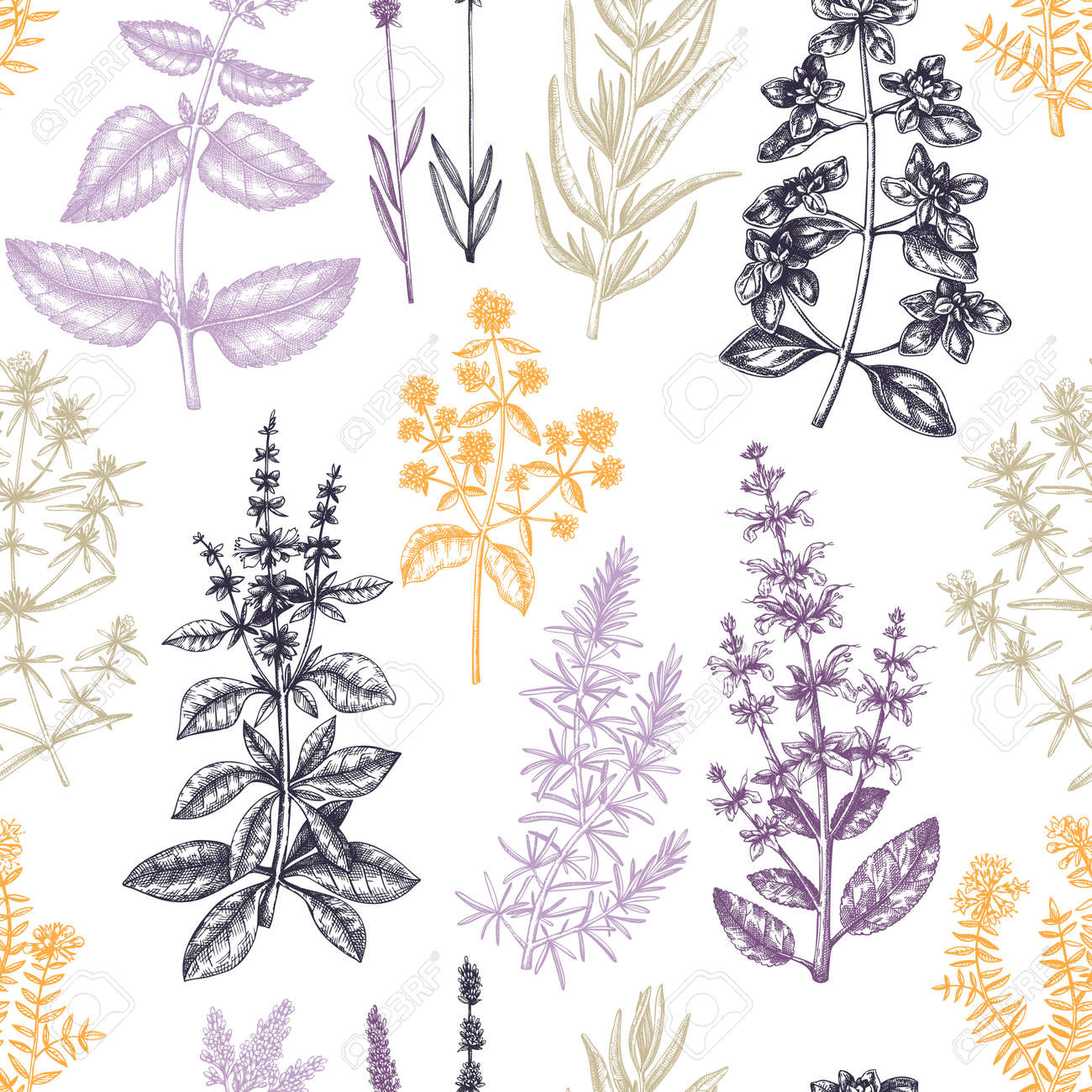 Traditional Provence herbs pattern. - 170259439