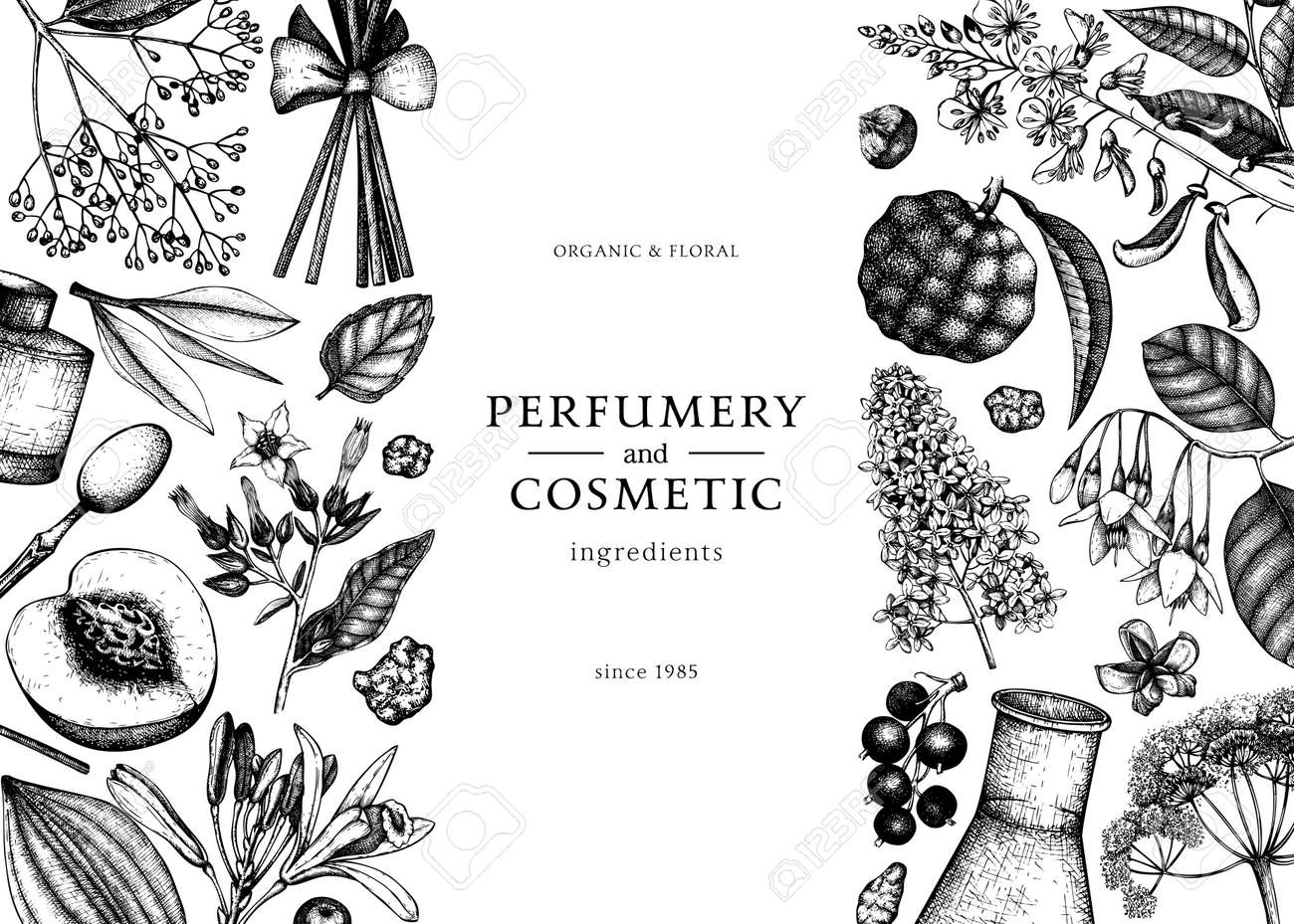Banner with fragrant fruits sketched perfumery and cosmetics ingredients illustration. - 170259570