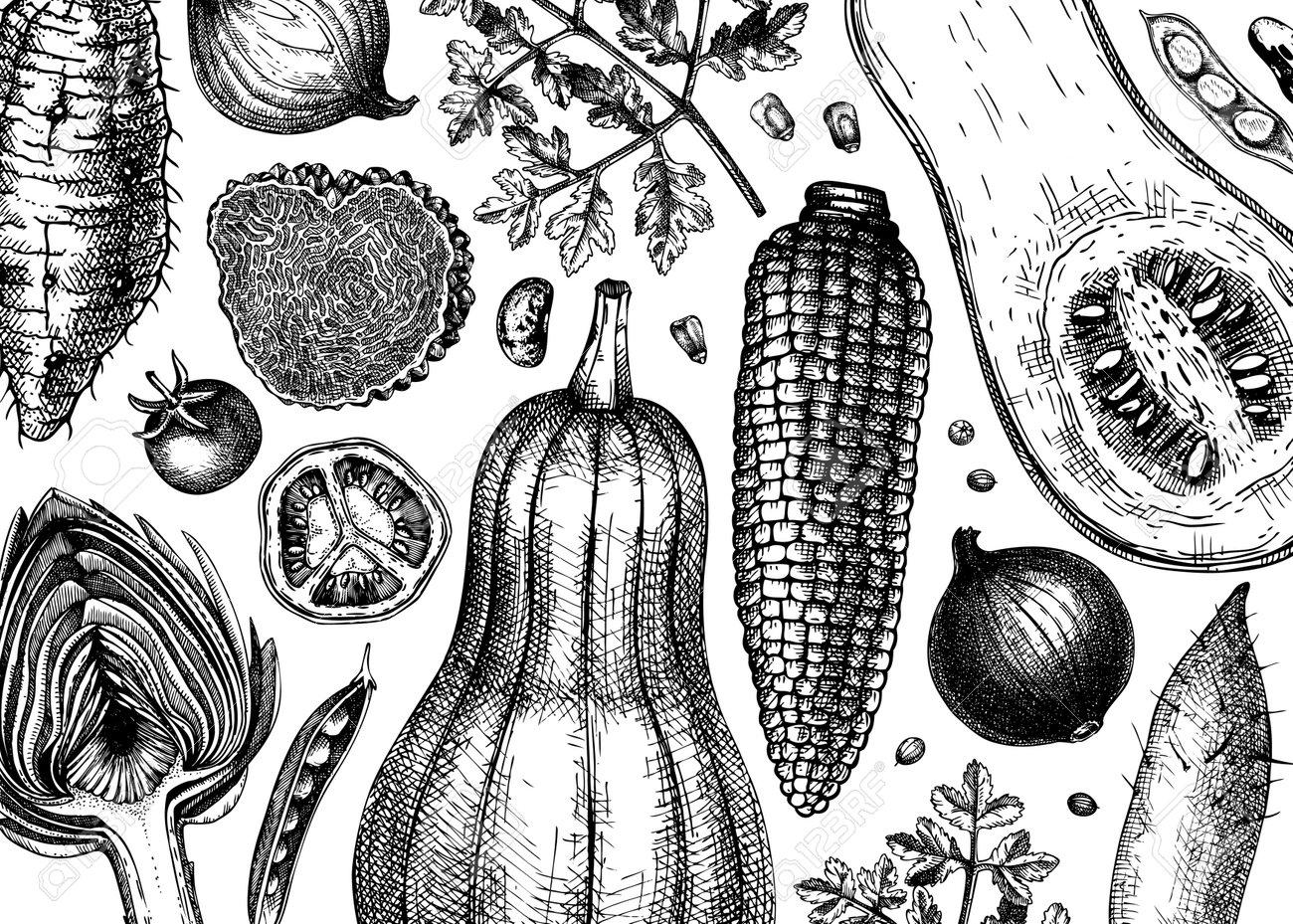 Hand-sketched vegetables vector background. Healthy food ingredients banner template. Vintage vegetables, herbs, mushrooms illustrations for menu, web banner, recipes, branding. - 170065541