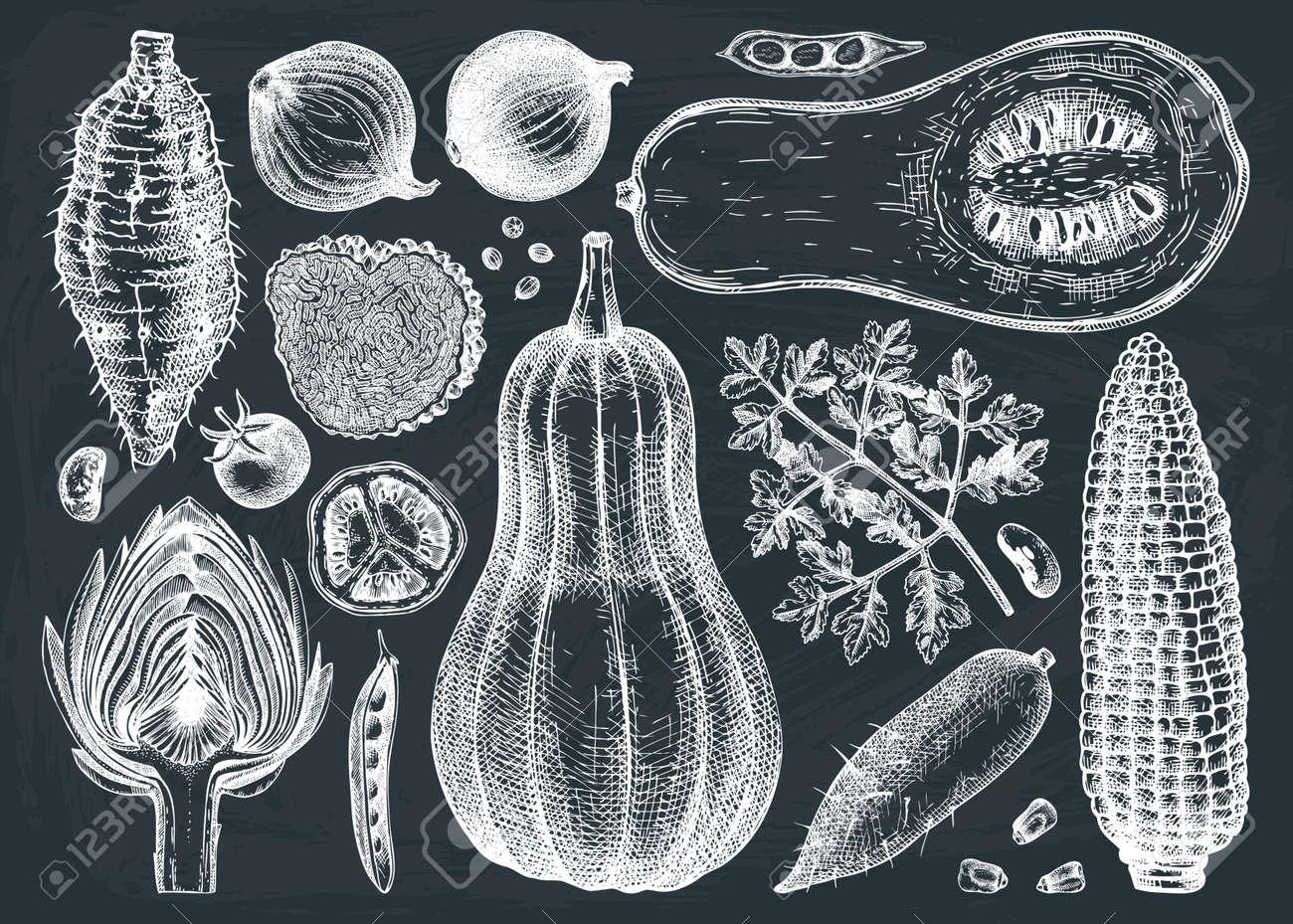 Seasonal vegetables vector drawings collection. Healthy food ingredients on chalkboard - vegetables, herbs, mushrooms illustration. Vintage kitchen set. Hand-sketched vegetables. - 170065495