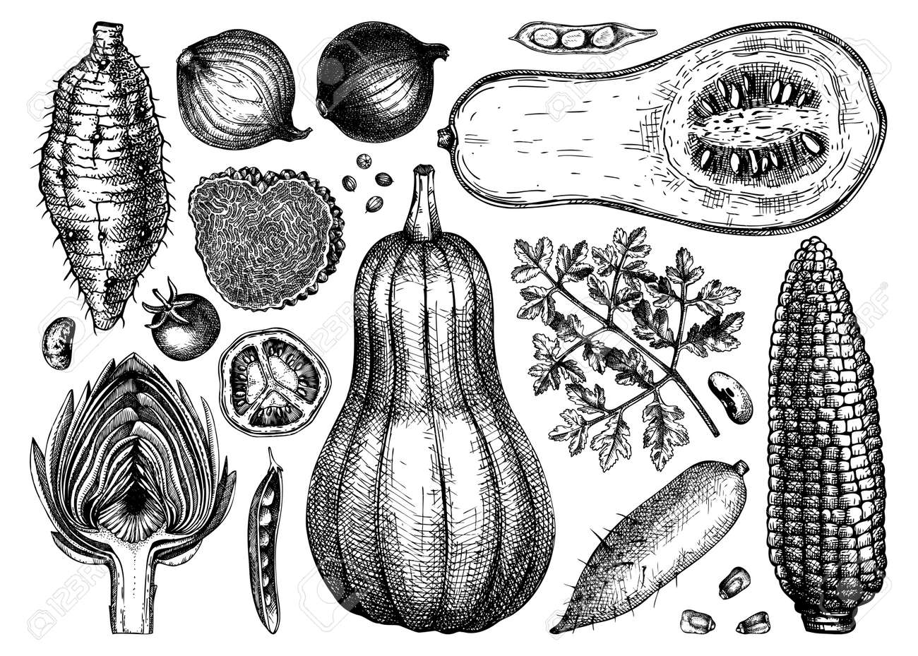 Vector vegetables, mushrooms and herbs collection. Hand-sketched healthy food ingredients drawings. Perfect for menu, recipes, web banner, ads, brands. Vintage style food illustrations - 170065955