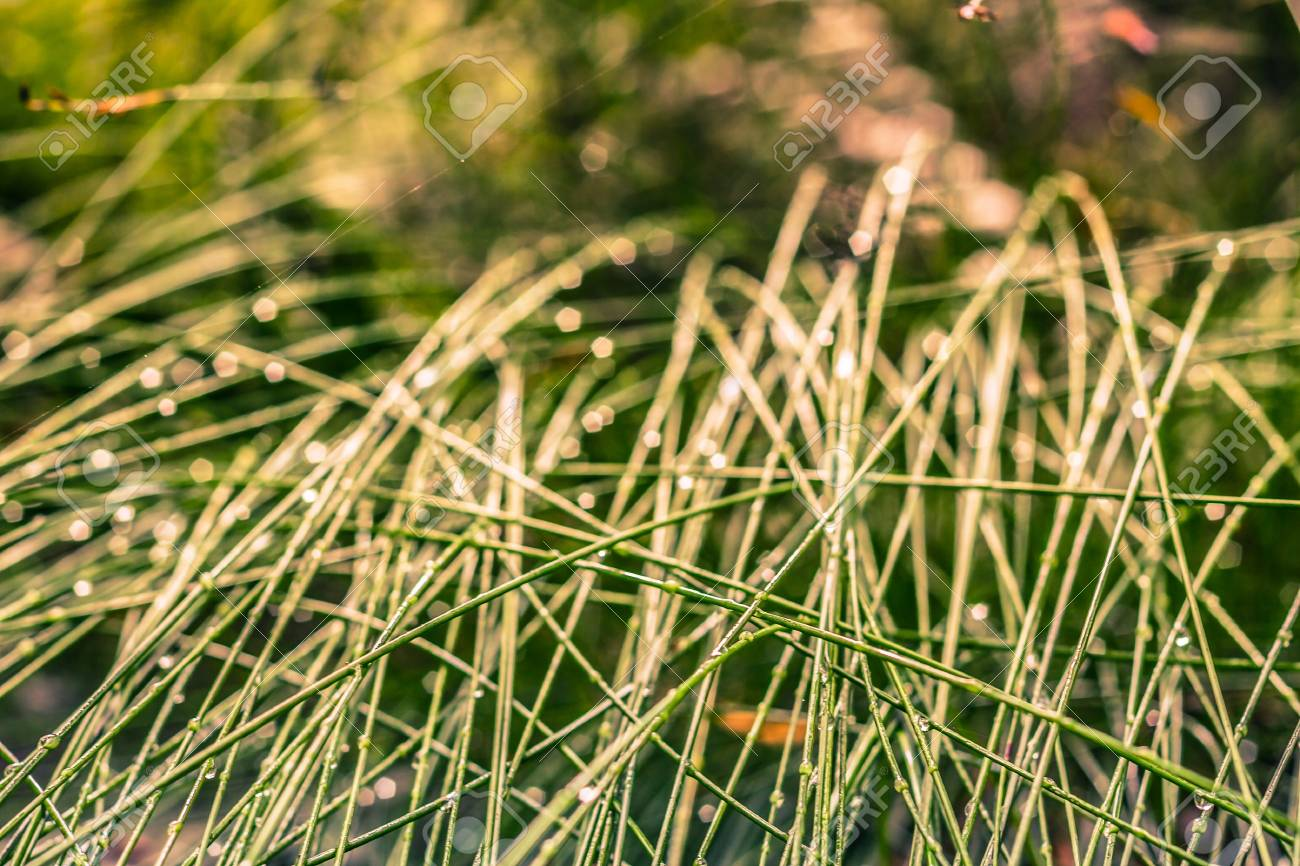 Detail of grass and dew, green natural background. Stock Photo - 18148726