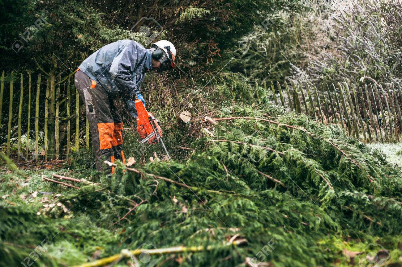 Professional gardener cutting tree with chainsaw. - 30622587
