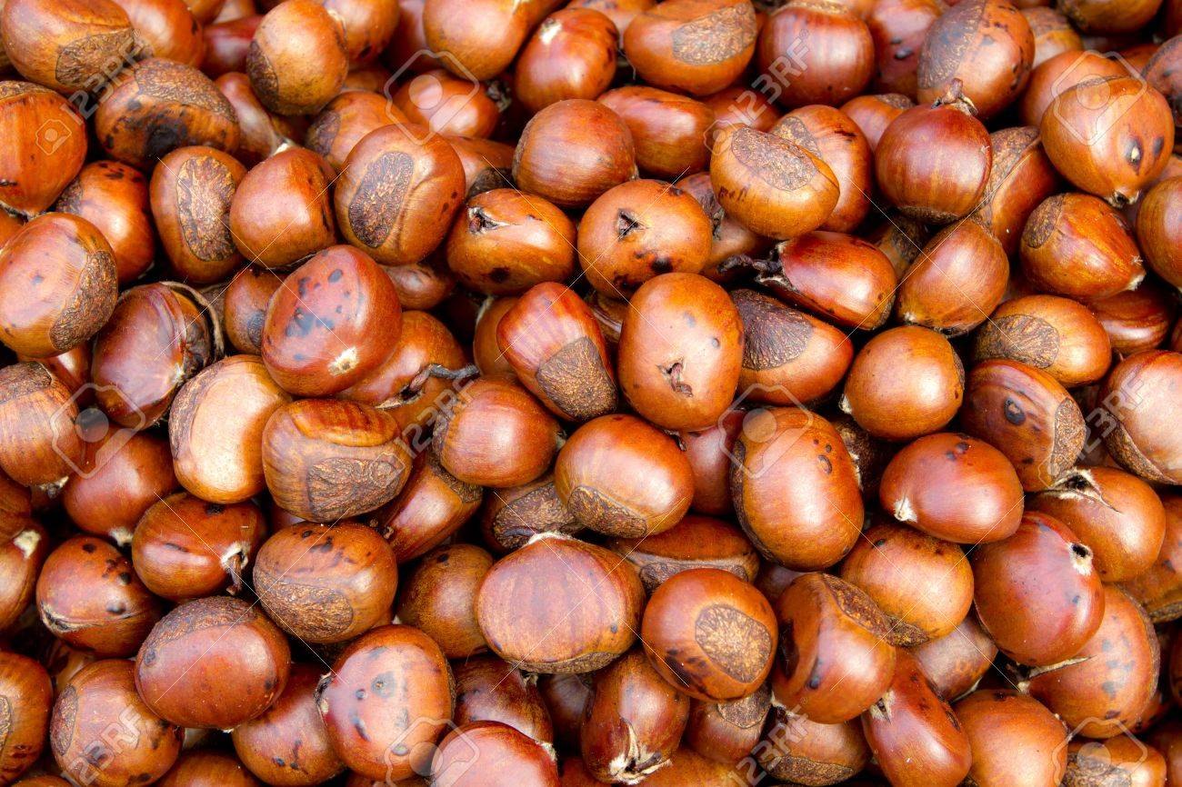 Chestnut Stock Photo - 12775463