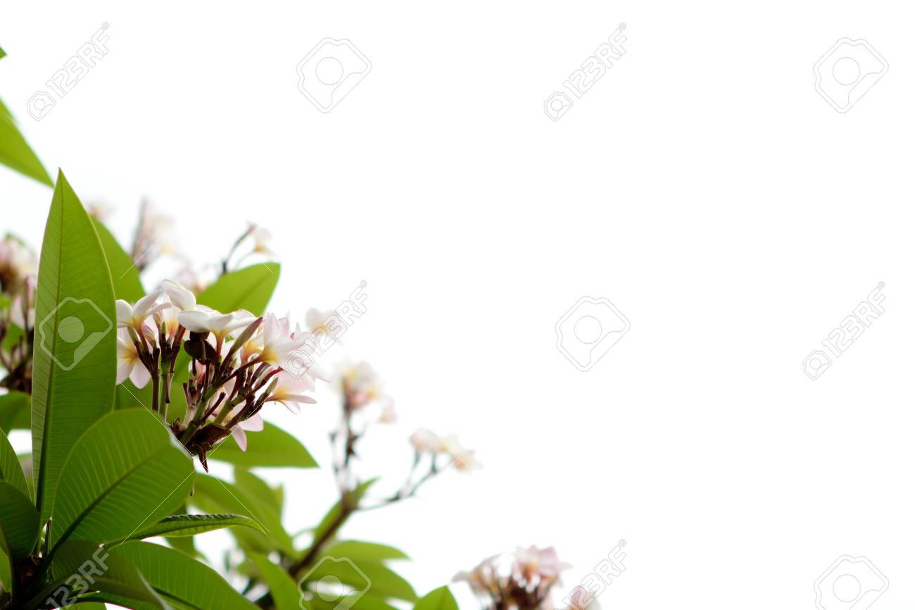 Beautiful white flower Stock Photo - 13213317
