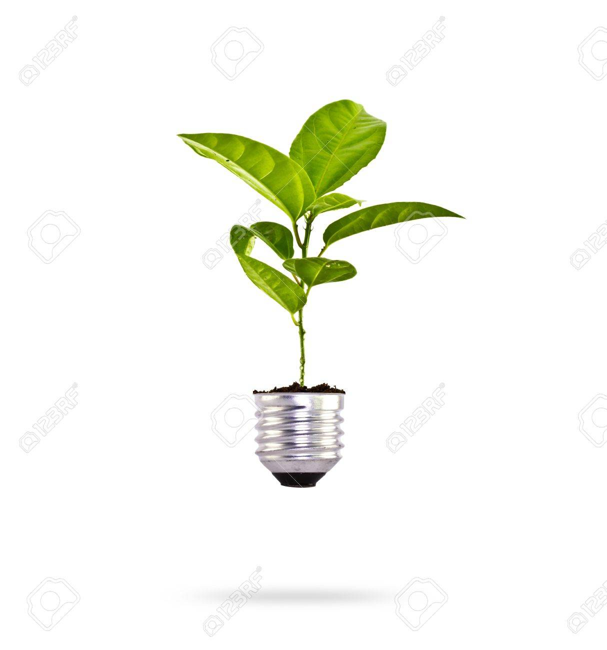 Eco concept: green tree growing out of a bulb. Stock Photo - 13626054
