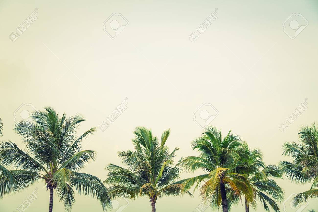 Coconut palm trees ( Filtered image processed vintage effect. ) - 42456667