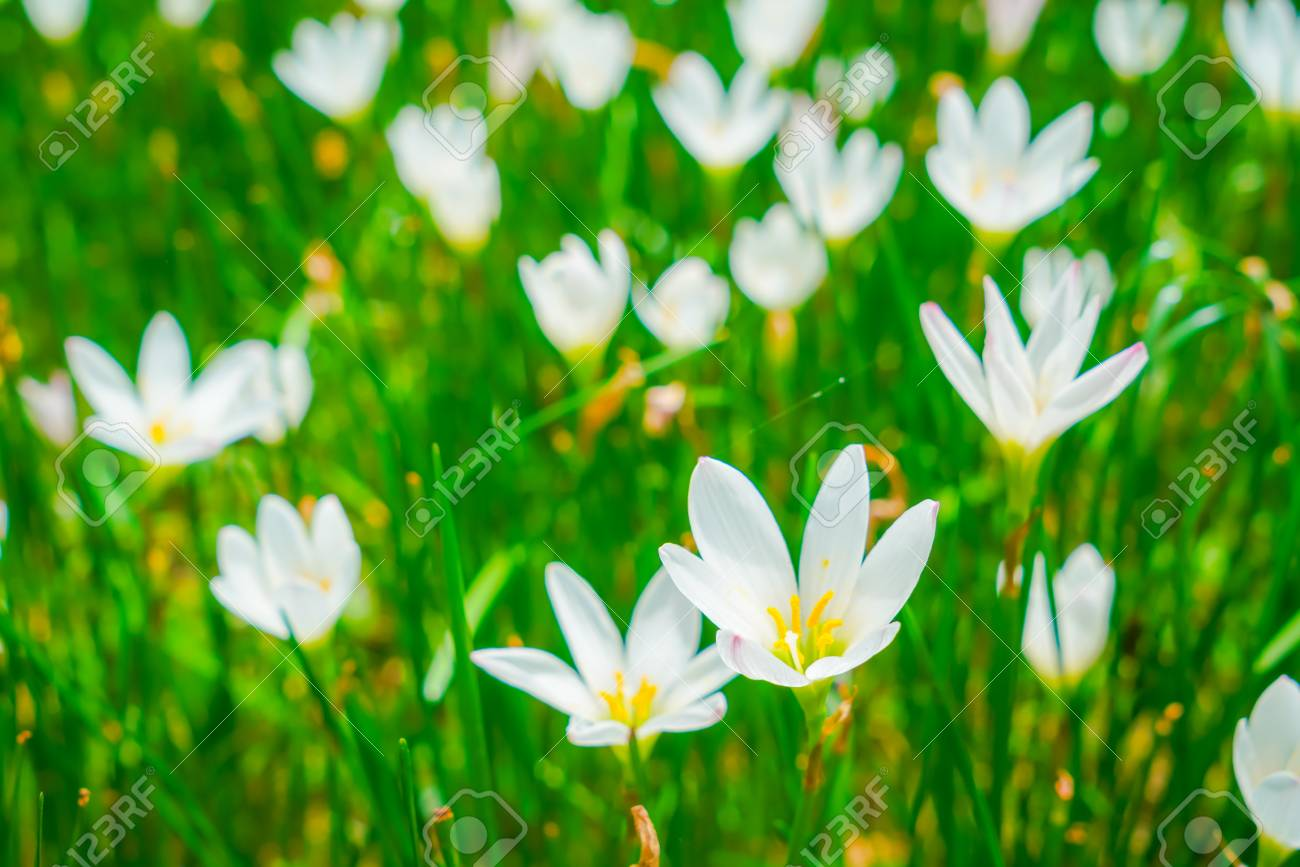 Beautiful white bunch flowers on green grass background stock photo beautiful white bunch flowers on green grass background stock photo 90110142 mightylinksfo