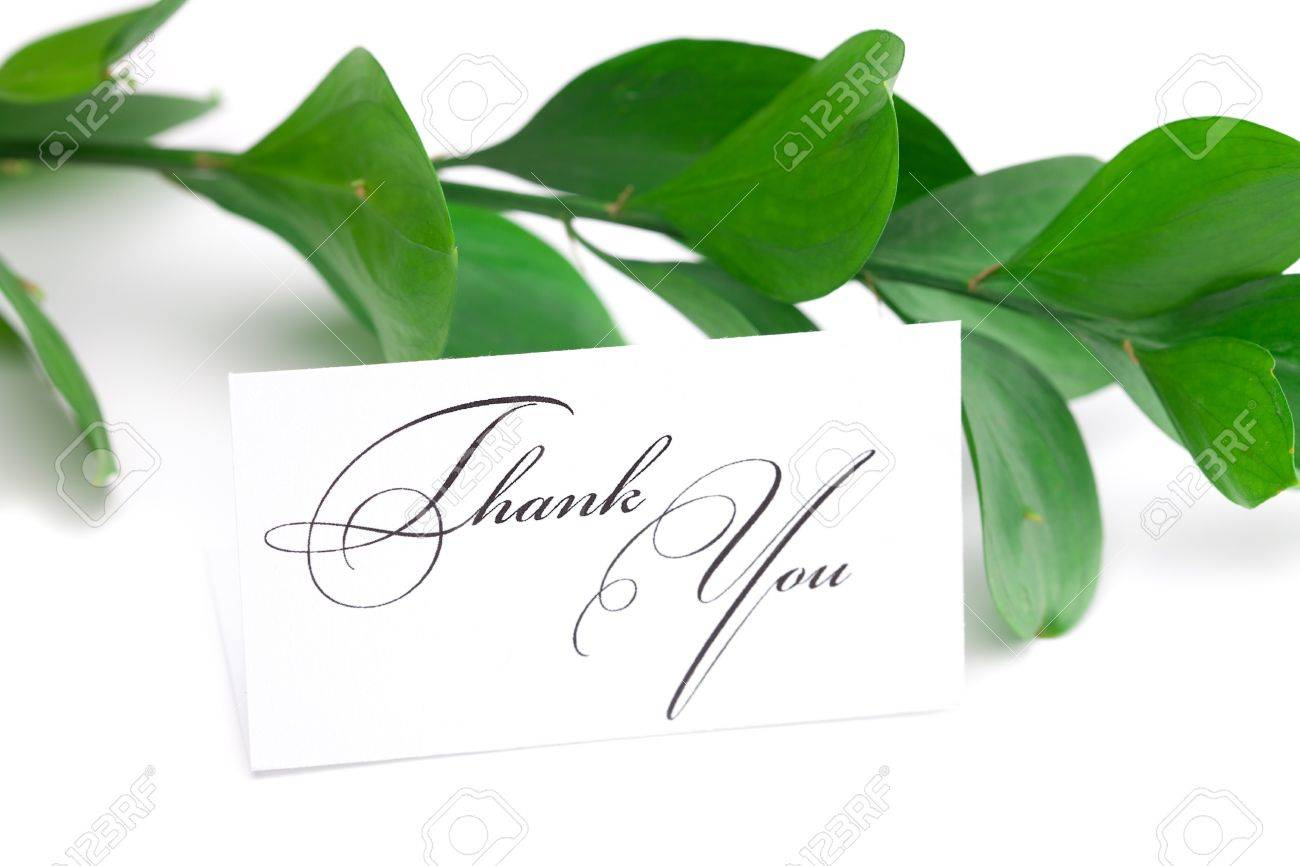 branch with green leaves and a card signed thank you isolated on white - 9278335