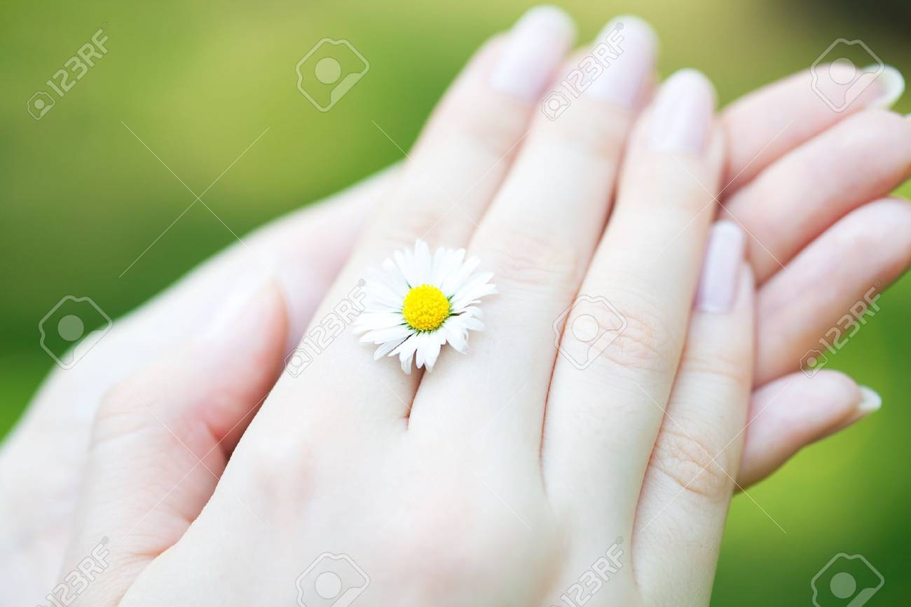 camomile in the hands of women - 9528193