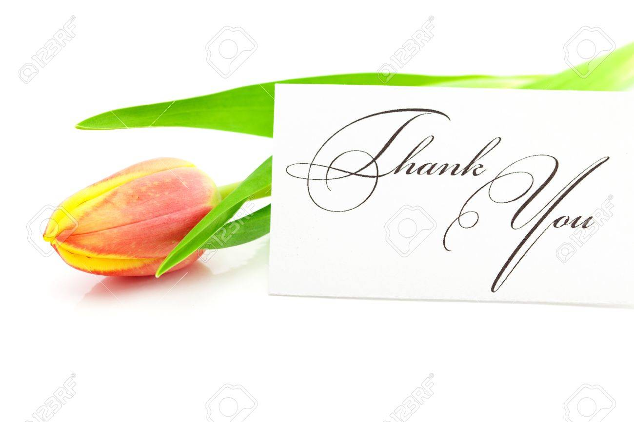 colorful tulips and a card signed thank you isolated on white Stock Photo - 9663048