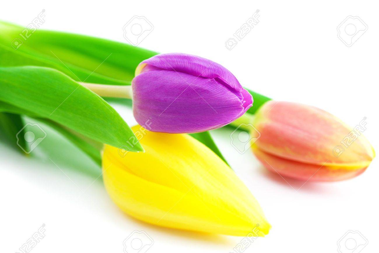 colorful tulips isolated on white - 9663188