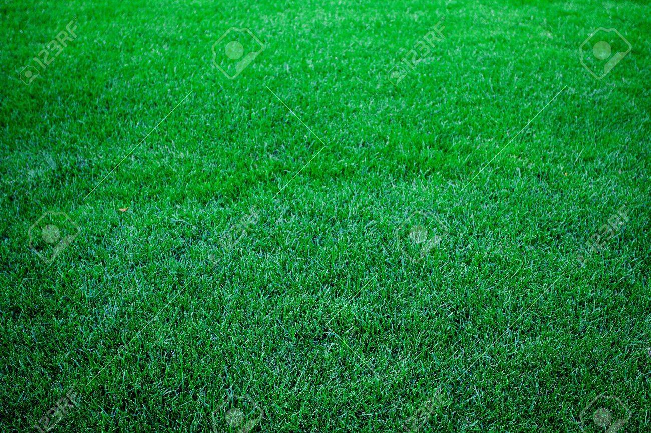 background of lush green grass - 9995701