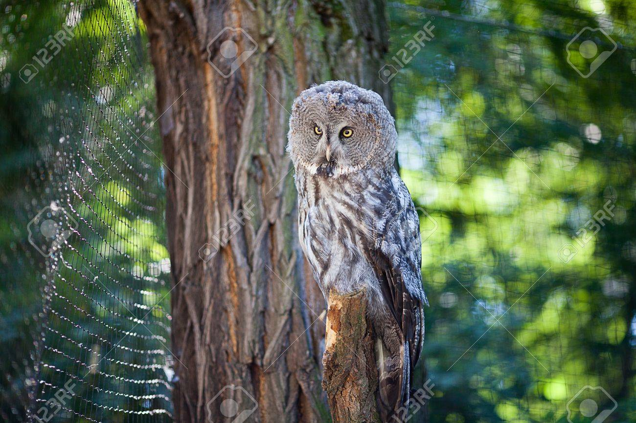 big owl at the zoo Stock Photo - 10617948