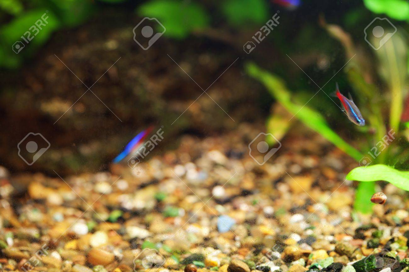 background of the aquarium with green plants Stock Photo - 12307405