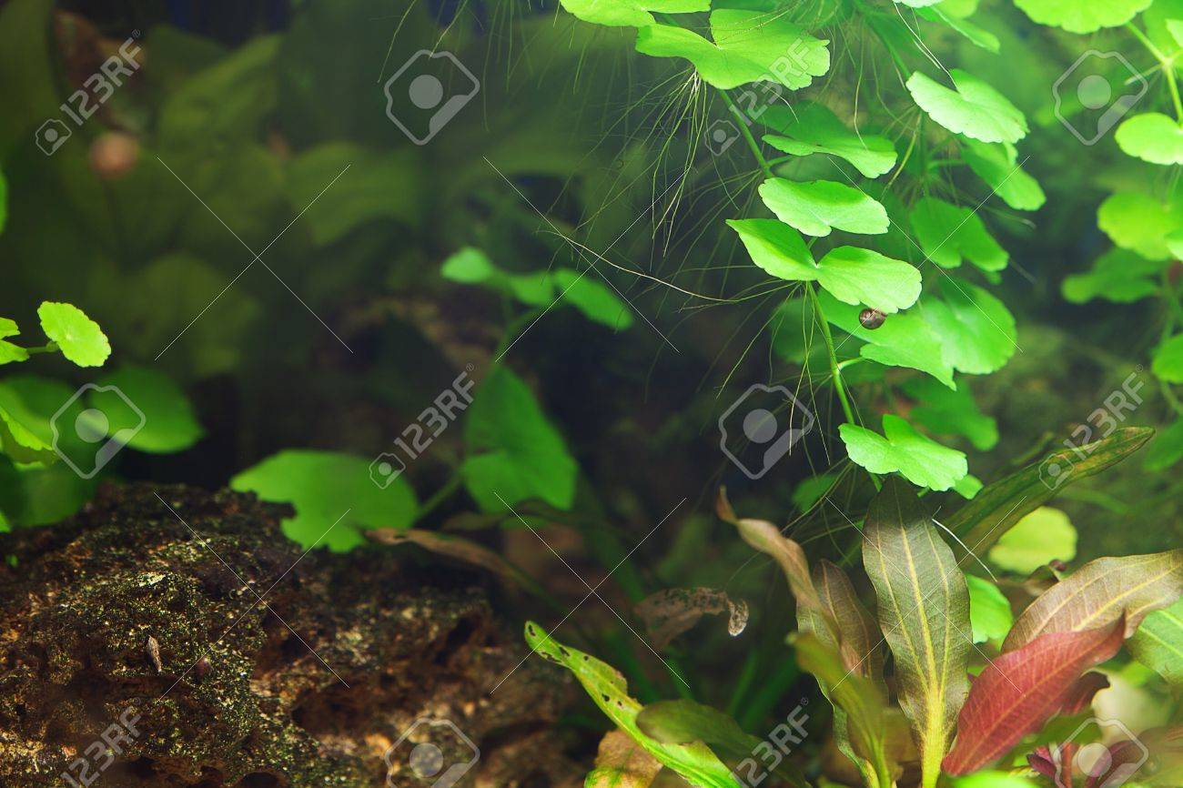 background of the aquarium with green plants Stock Photo - 12307382