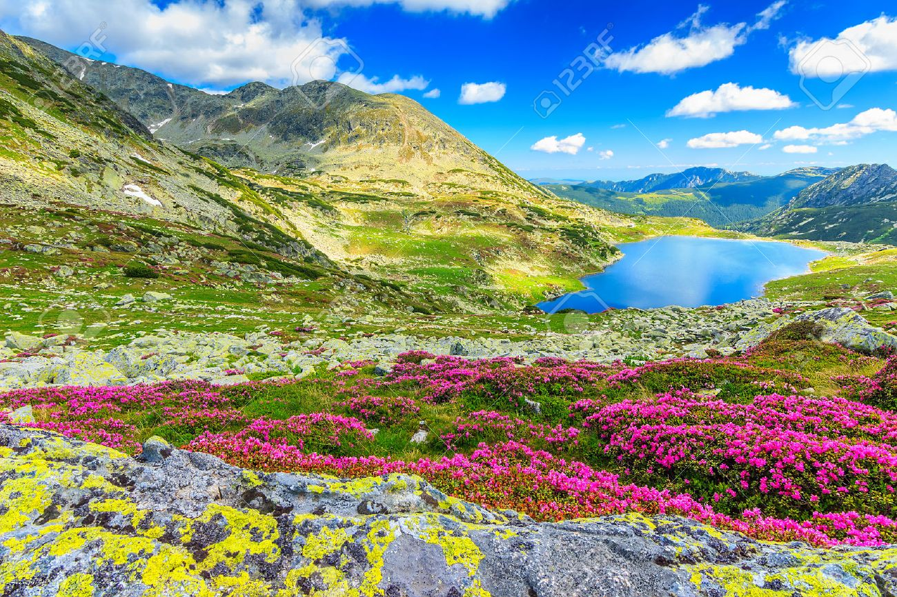 Glacier lake,high mountains and stunning pink rhododendron flowers,Retezat National Park,Carpathians,Romania,Europe - 38982458