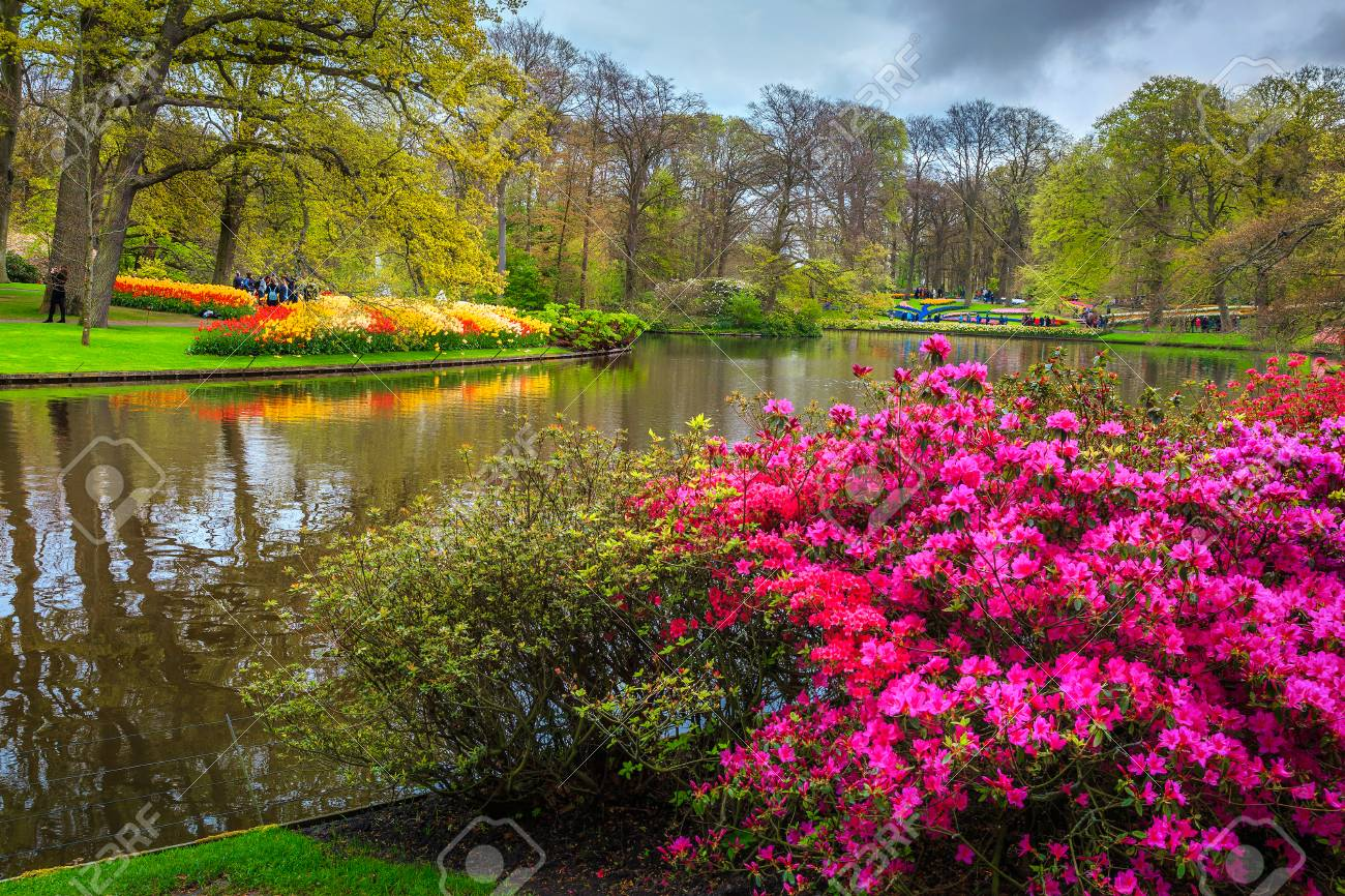Beautiful spring landscape famous keukenhof garden with blooming beautiful spring landscape famous keukenhof garden with blooming tulips azalea and colorful flowers izmirmasajfo
