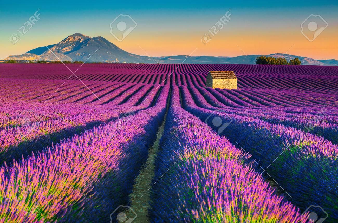 Majestic colorful lavender fields near Valensole touristic village, Provence region, France, Europe - 94813712