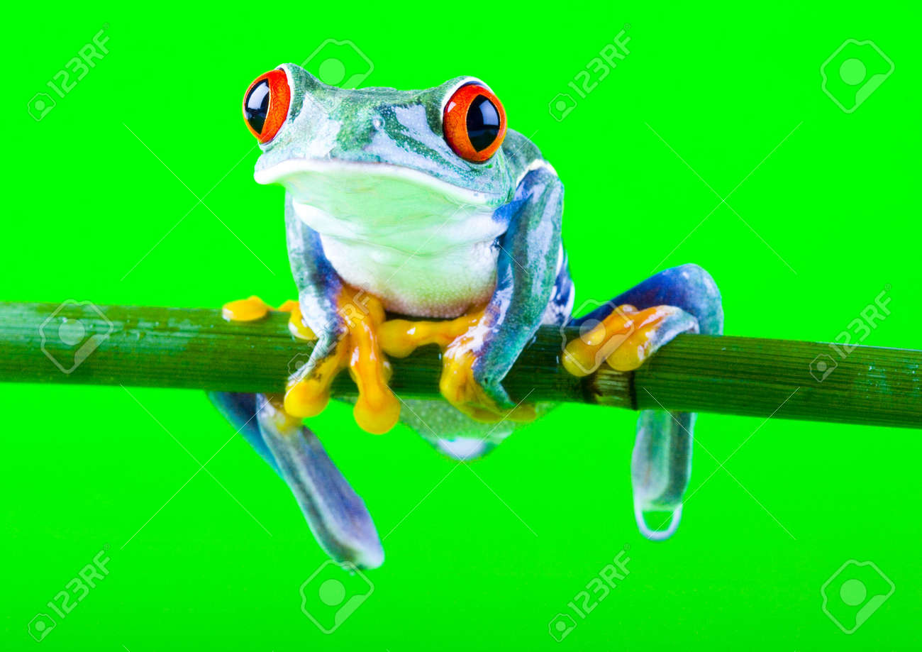 Red eyed Stock Photo - 788270