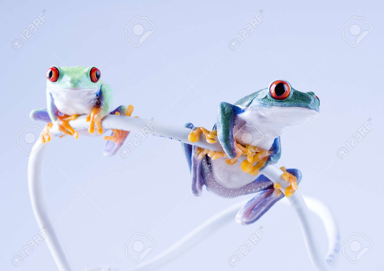 internet frog stock photo picture and royalty free image image 788054