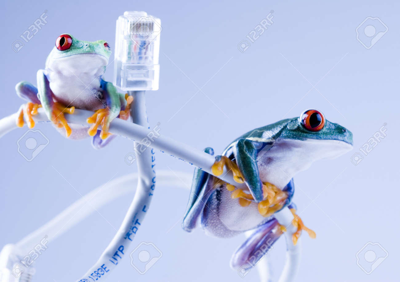 Web frog Stock Photo - 788051