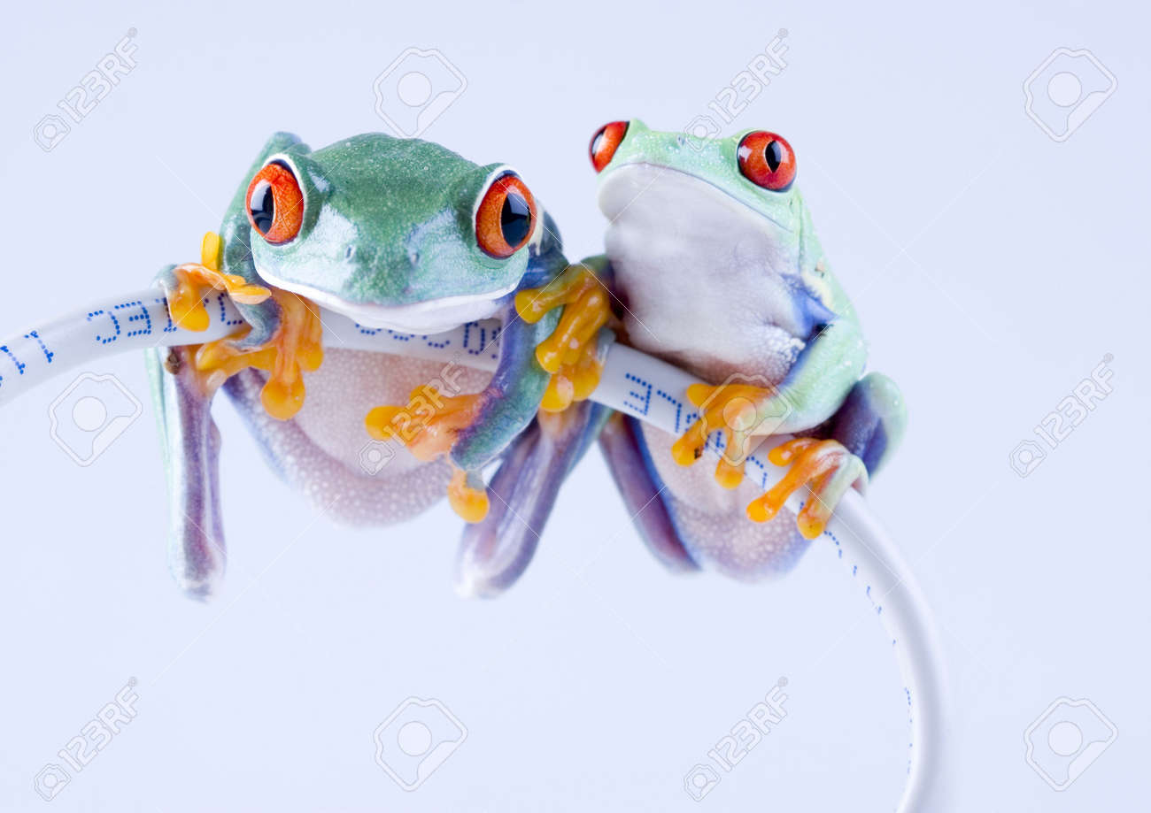 internet frog stock photo picture and royalty free image image 788049