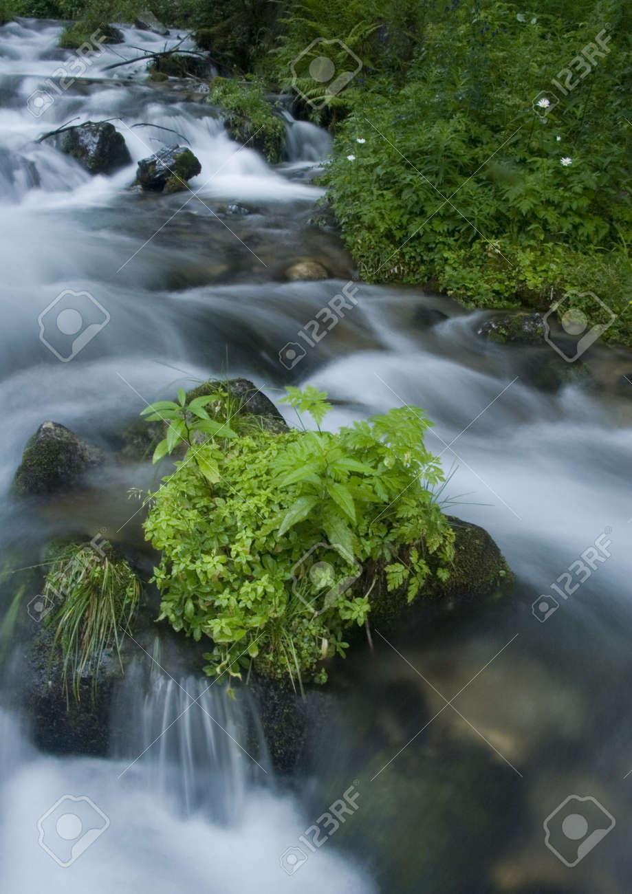 Stream in mountains Stock Photo - 804051