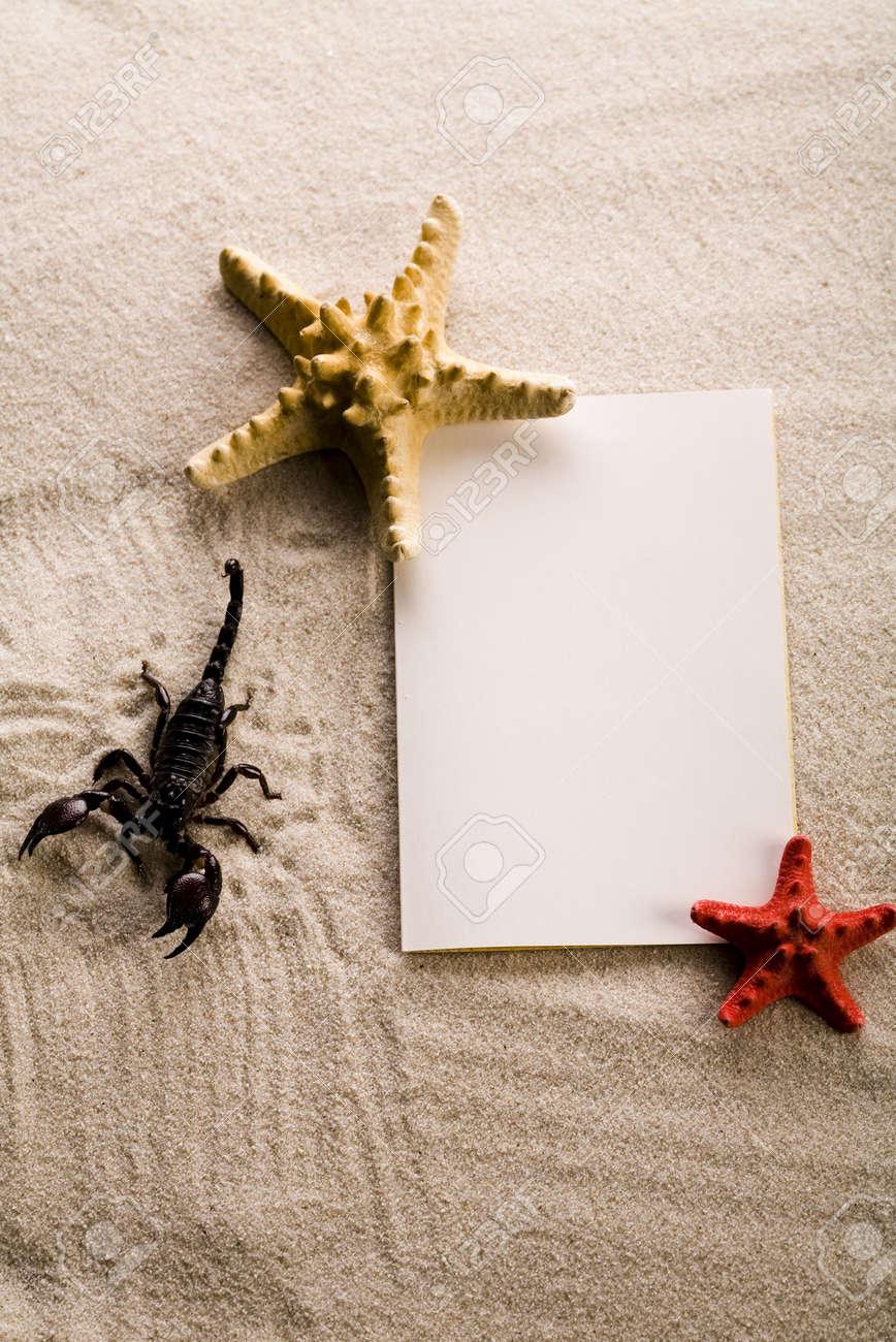 Sand and seashells frame & Scorpion Stock Photo - 3494037