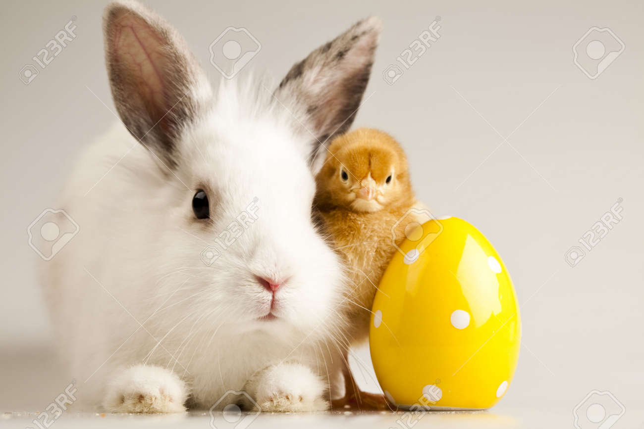 Happy Easter Chickens in