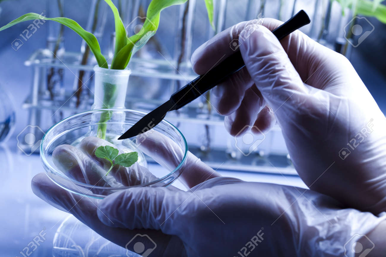 Floral science in blue laboratory Stock Photo - 7385902
