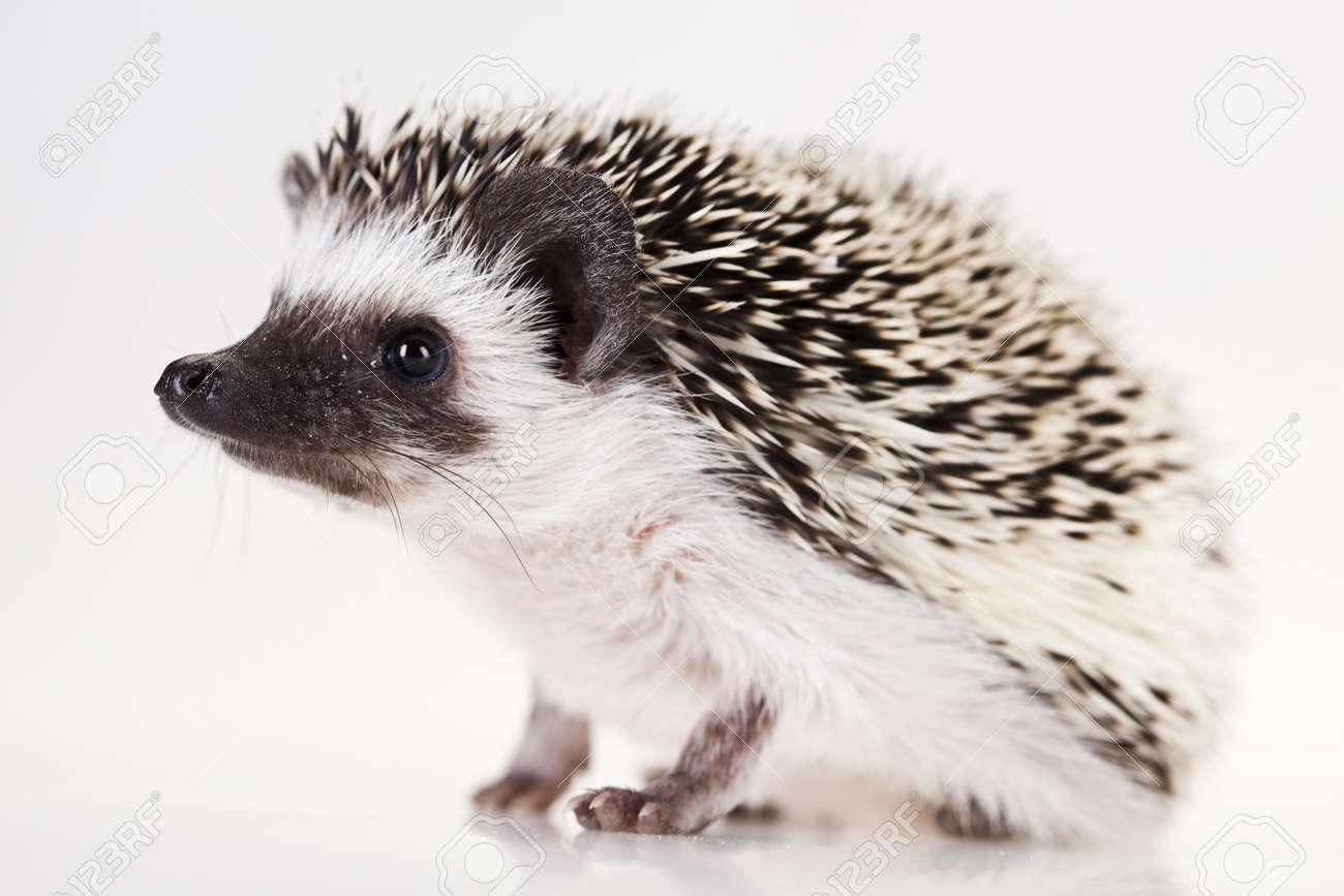 Hedgehog Stock Photo - 8252322