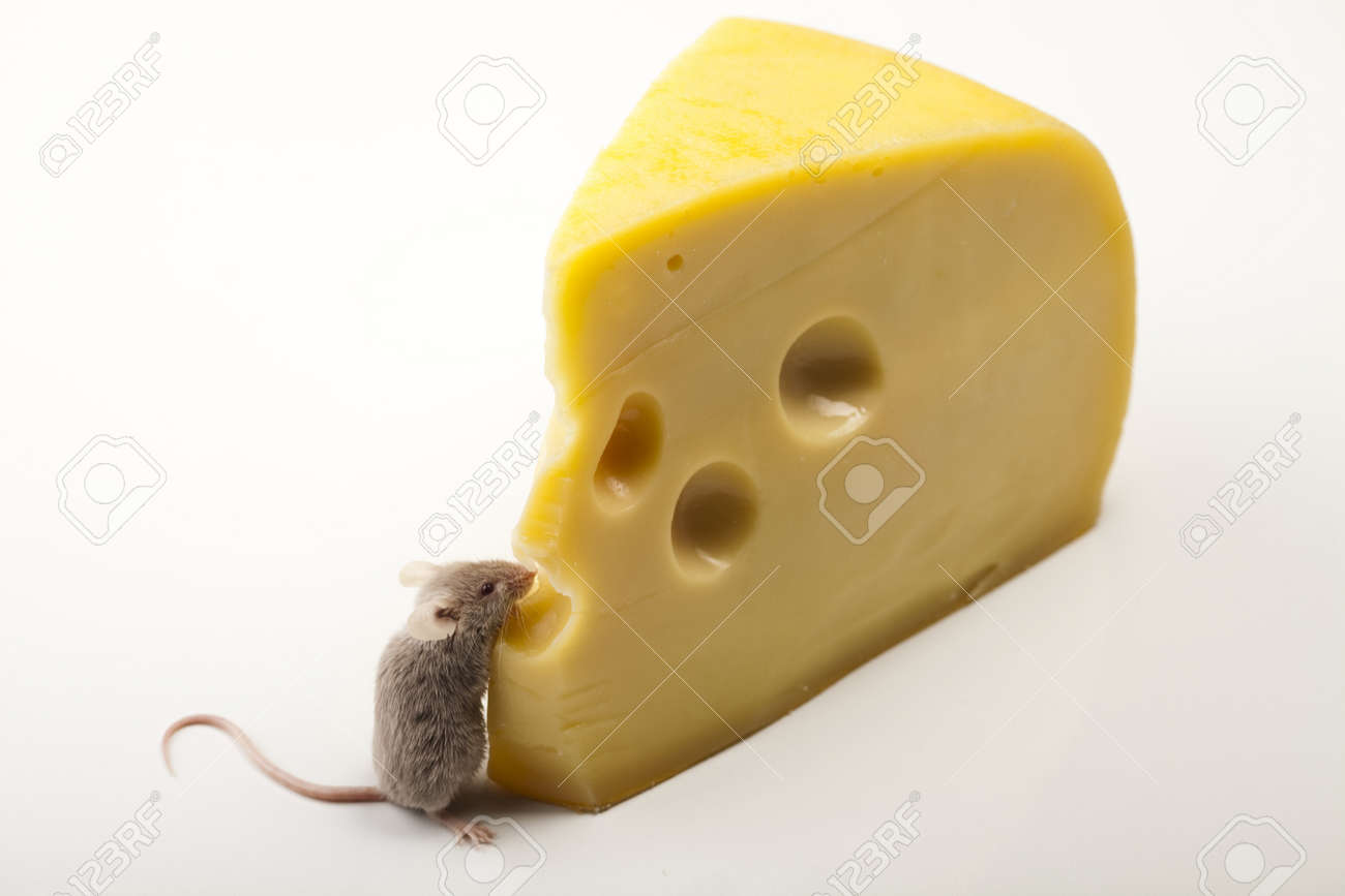 Little animal - mouse Stock Photo - 9949187