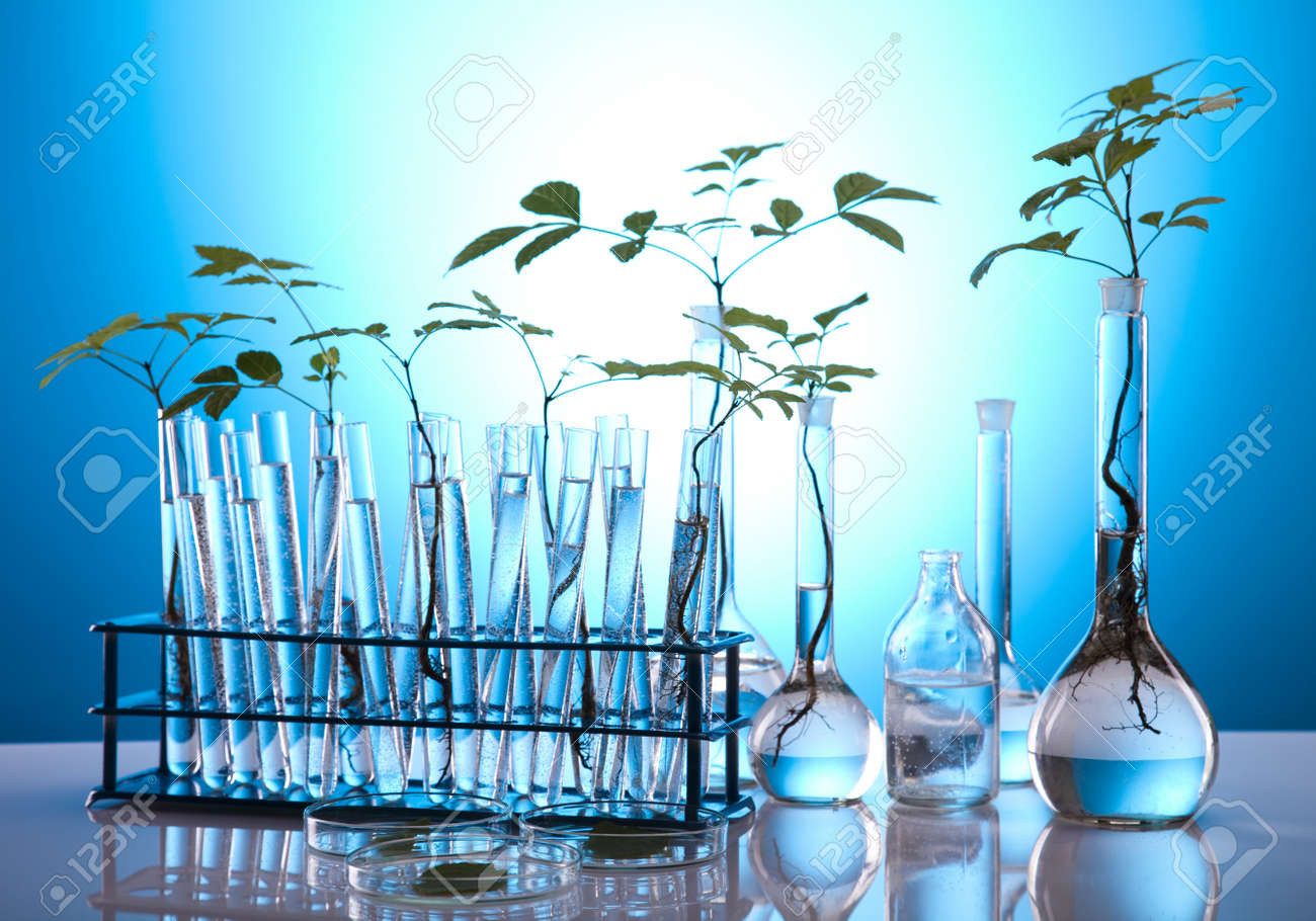 Plants in test tubes in  laboratory Stock Photo - 10079361
