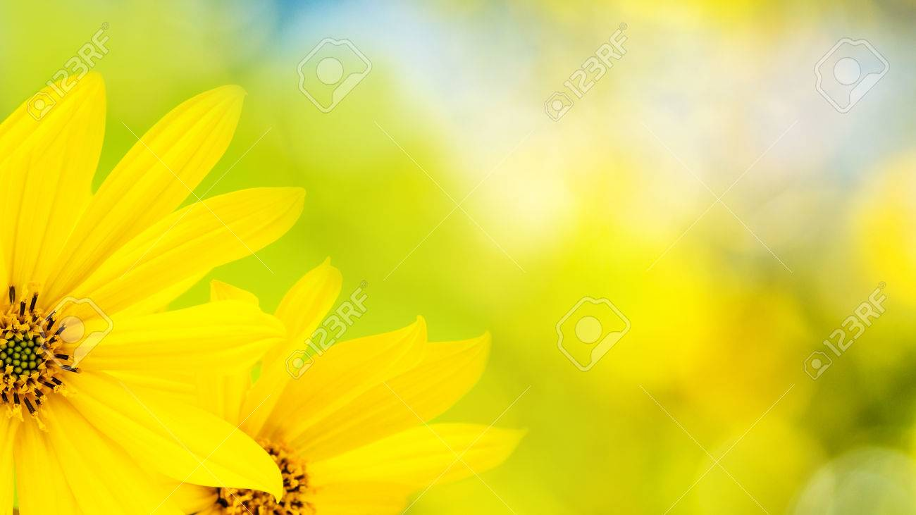 Yellow flower with thin petals on natural light green background stock photo yellow flower with thin petals on natural light green background mightylinksfo