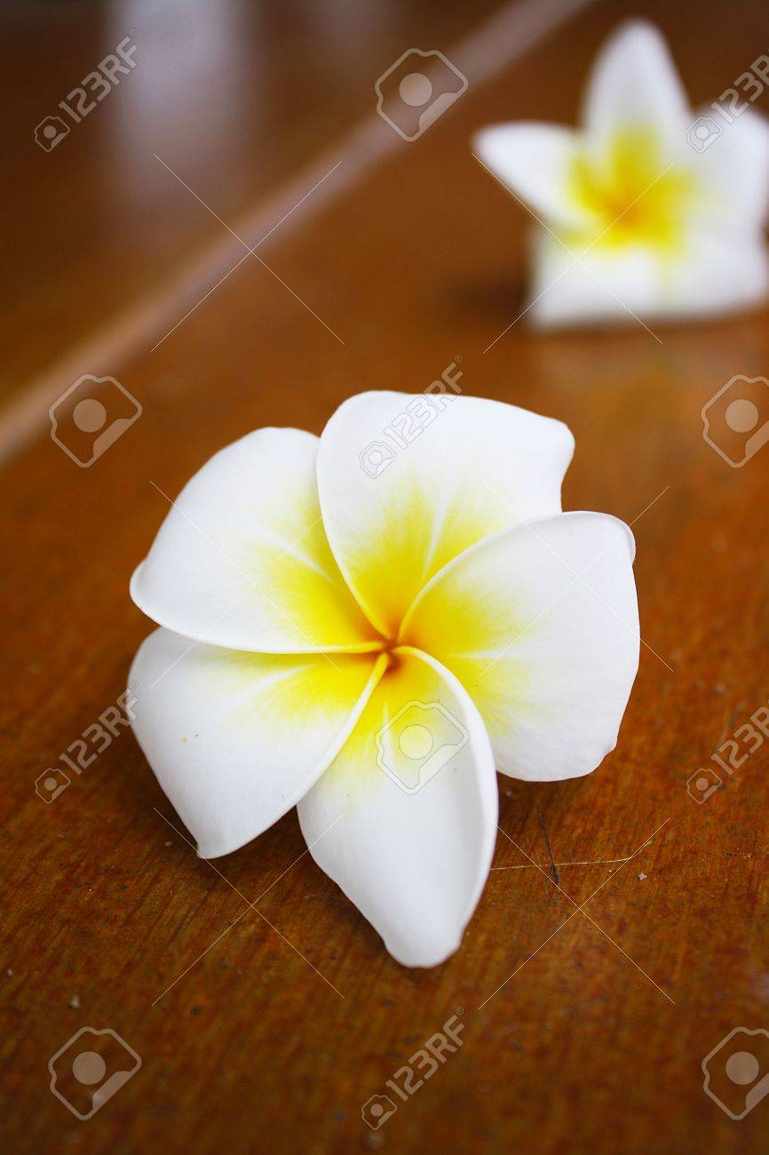 Frangipani flowers. Stock Photo - 11814280