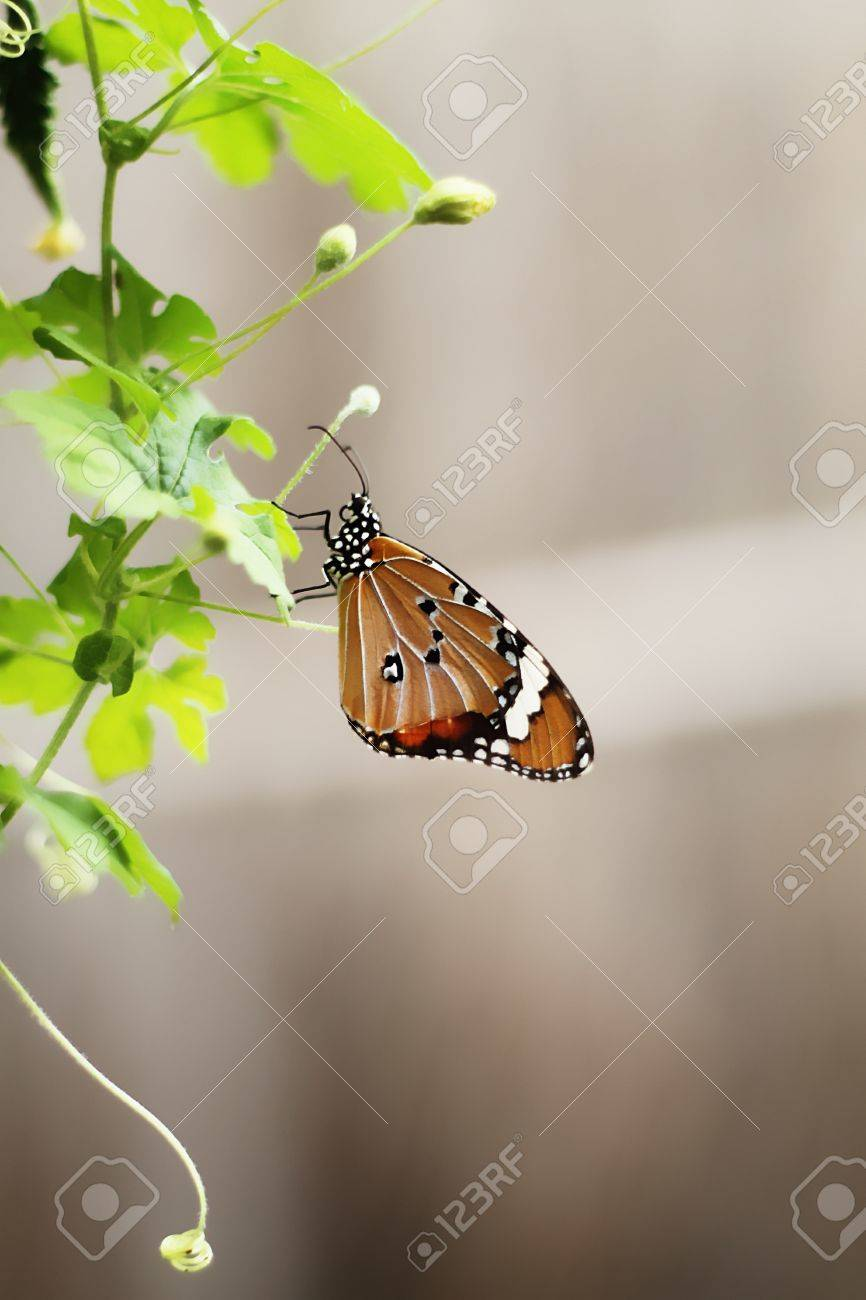 Butterfly on top the biennial plant Stock Photo - 14075907
