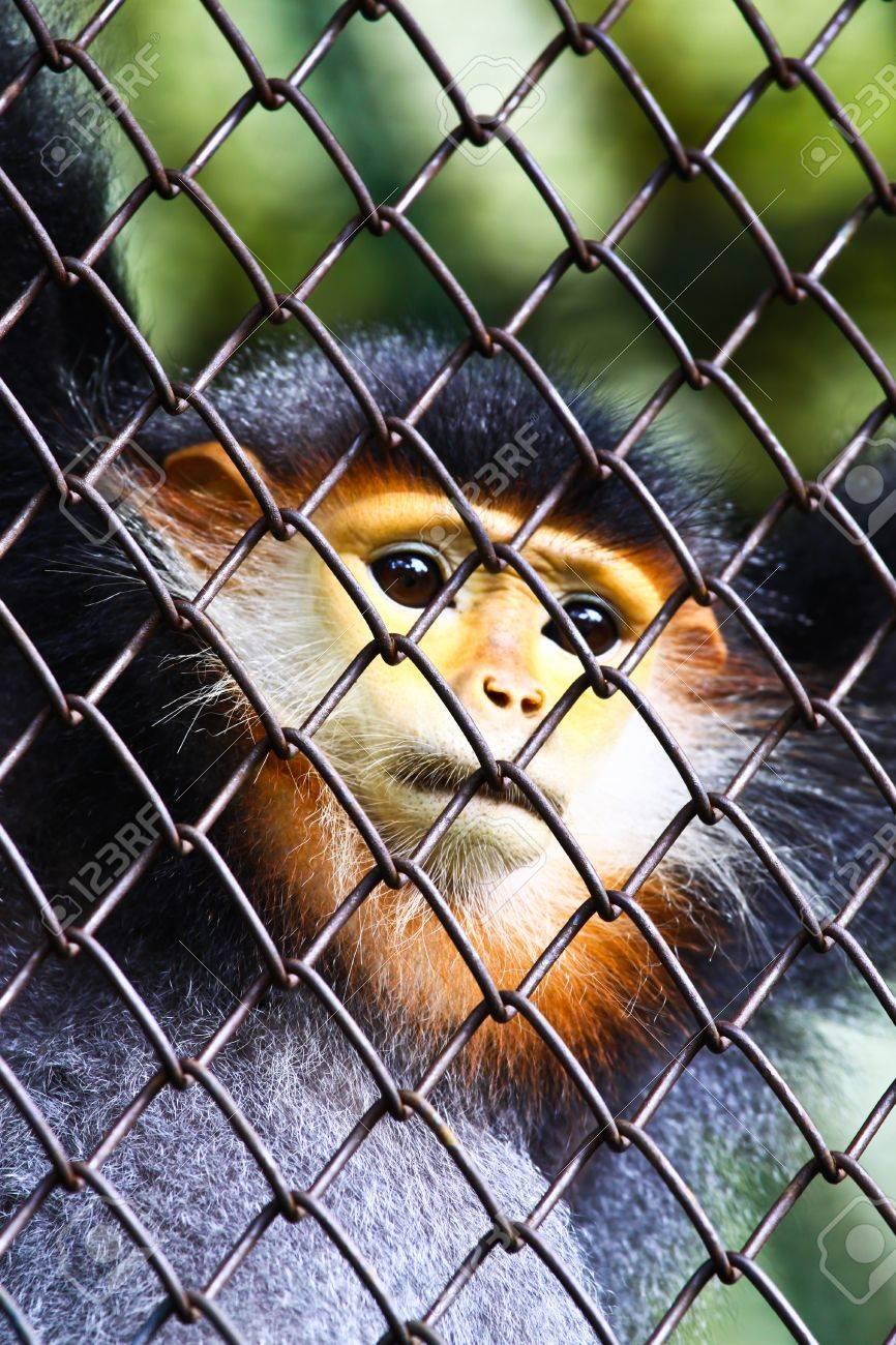 Monkey and hope freedom Stock Photo - 18326538