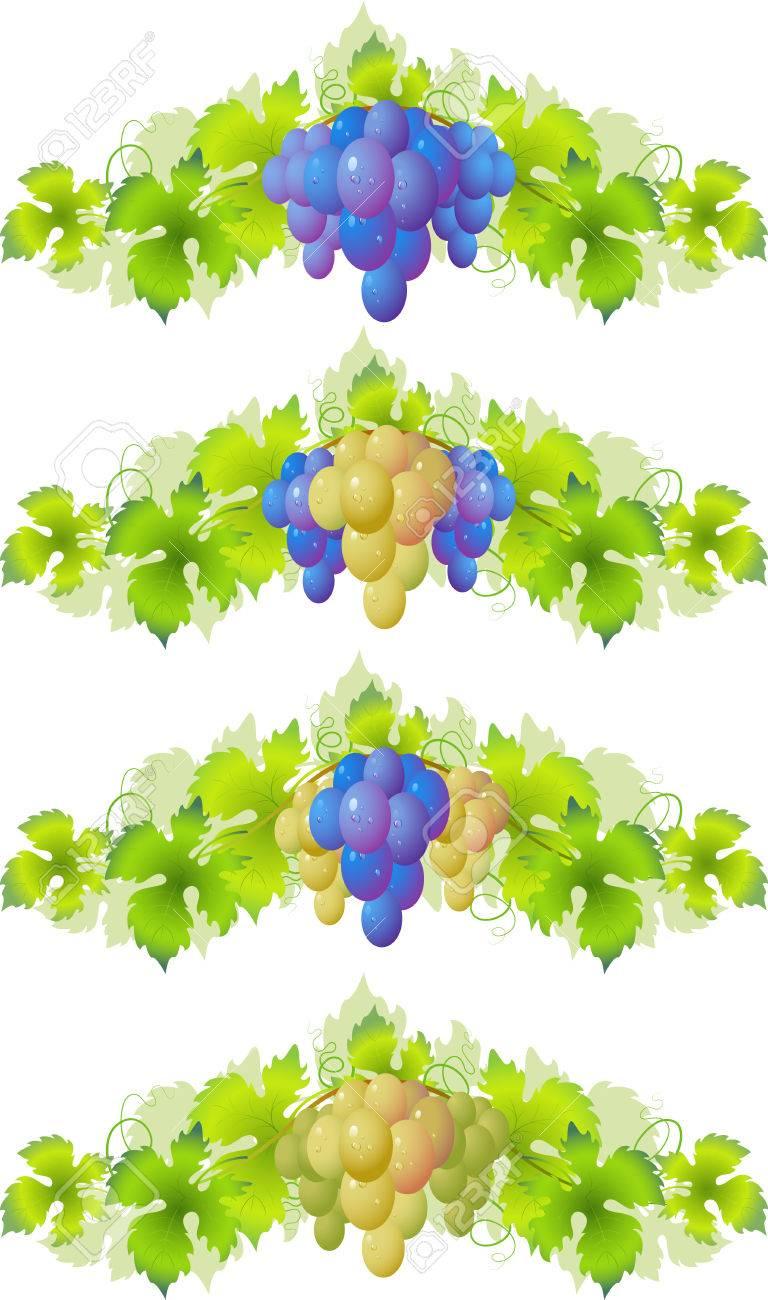 Vine. Design Element Stock Vector - 6015972
