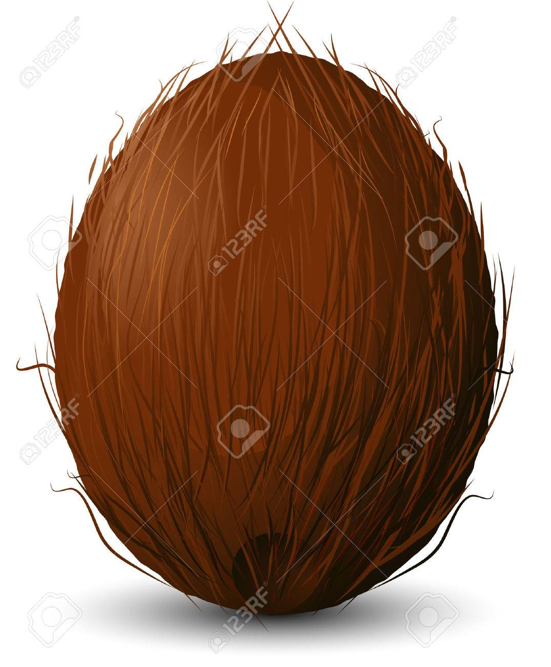 Coconut on a white background. Stock Vector - 8970827