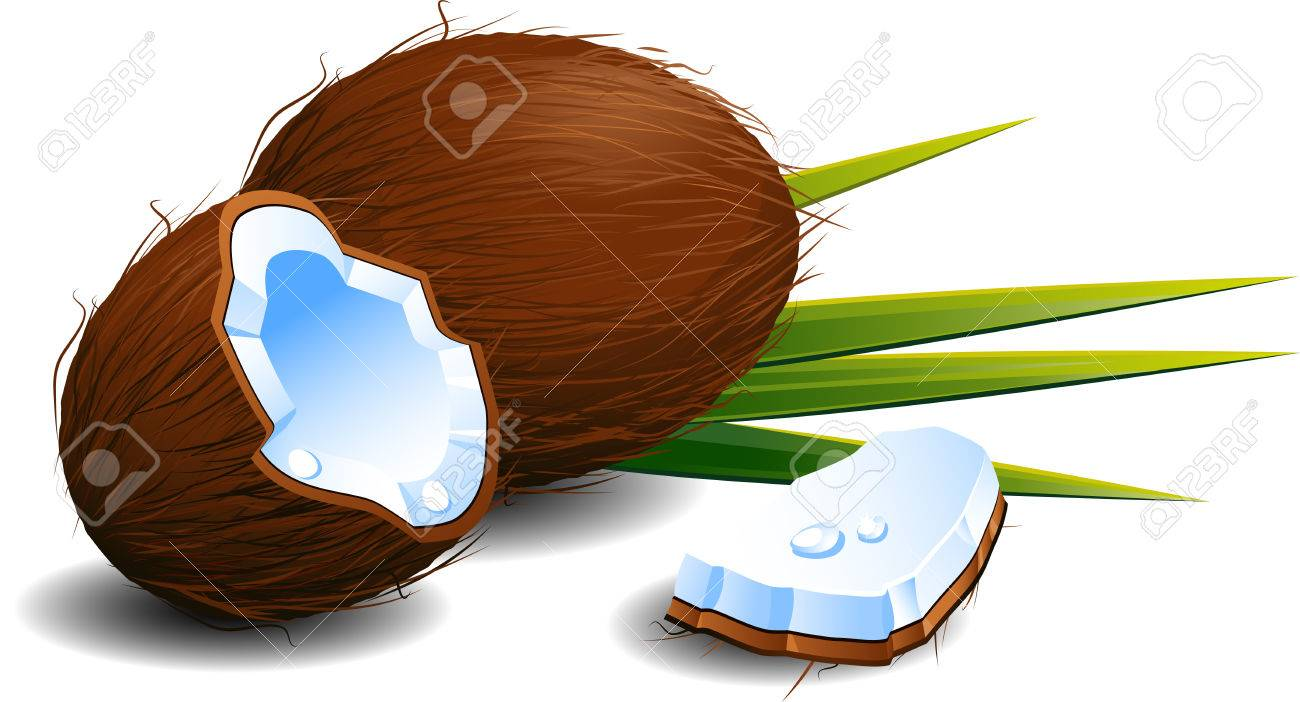 Coconuts over white. Stock Vector - 8970828