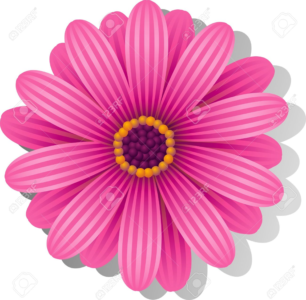 Beautiful pink Gerber Daisy over white. Stock Vector - 9613618
