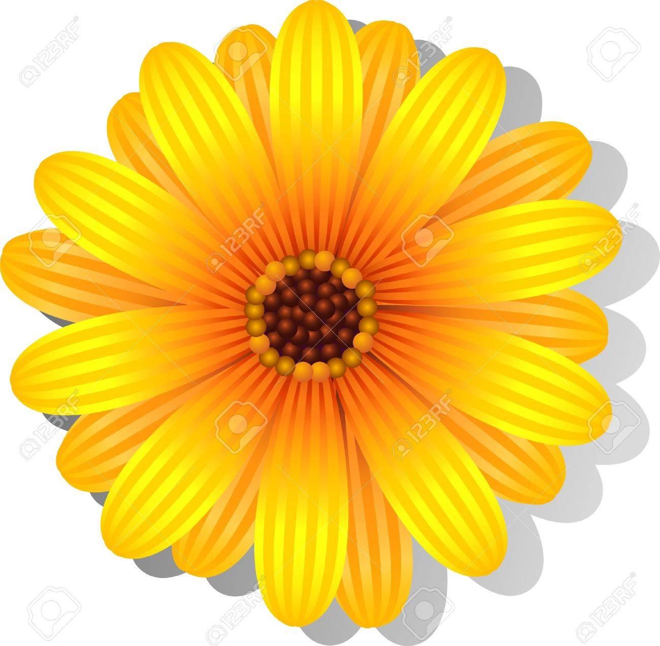 Gerber Daisy Cliparts, Stock Vector And Royalty Free Gerber Daisy ...