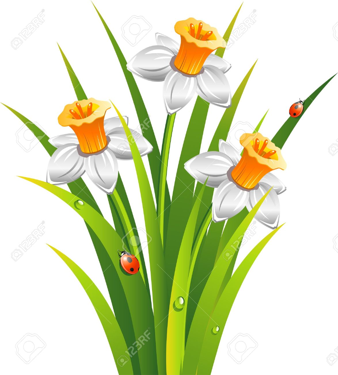 1 312 daffodil drawing stock vector illustration and royalty free