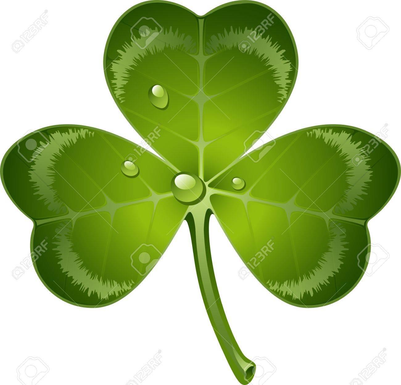 clover leaf over white. Stock Vector - 12284513